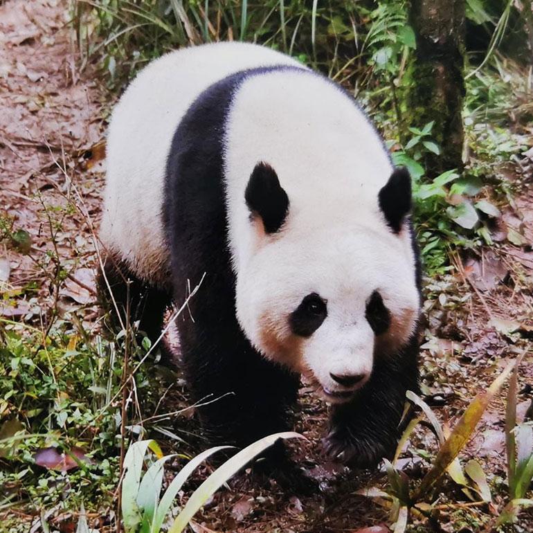 KFO Stelz | Panda Patenschaft